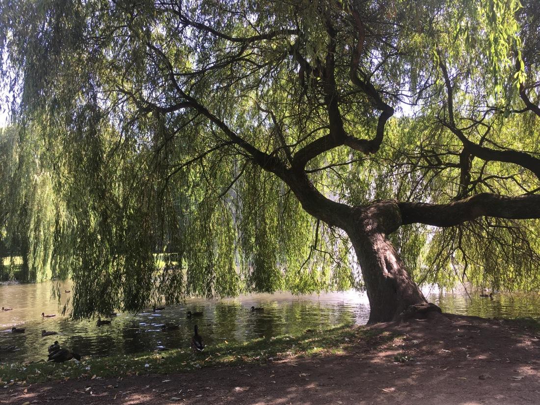 Baum meiner Jugend